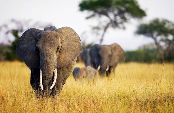 0-elefantes