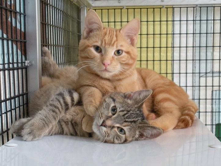 shelter-cat3.jpg