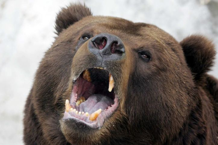 0-urso