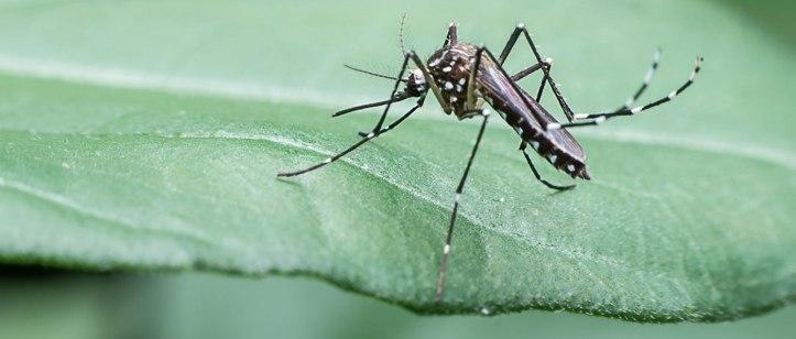 3-dengue-fever-banner