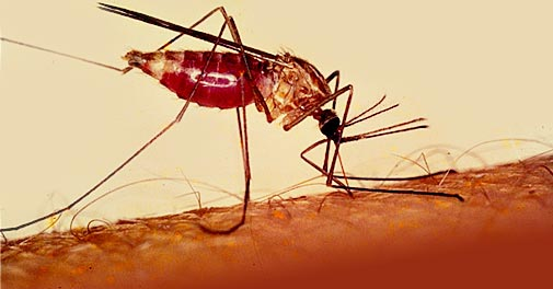 malaria_special