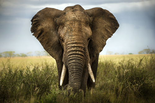 0-elefante