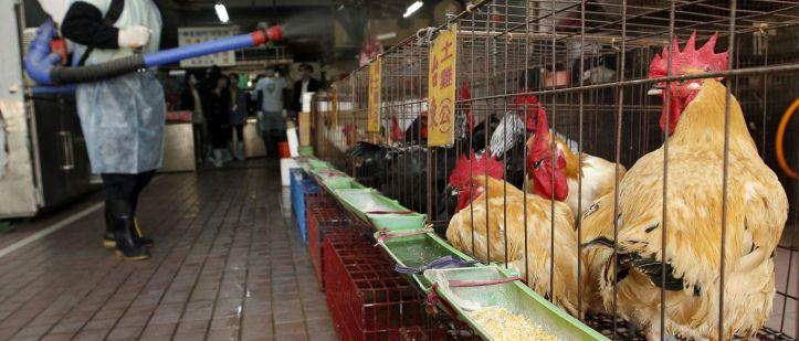3-galinhas