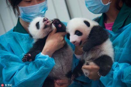 0-pandas