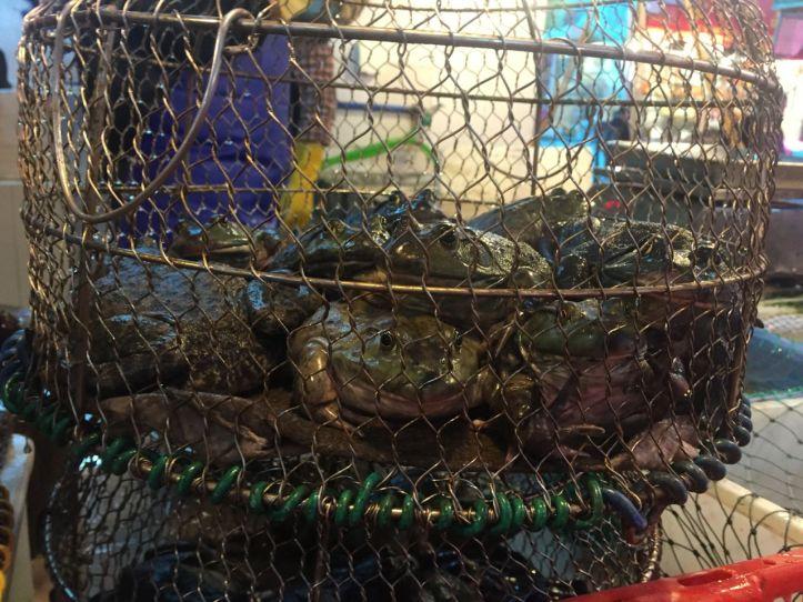 3.frogs.jpg