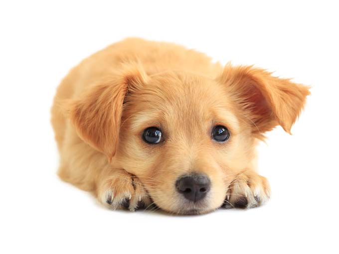 0.puppy