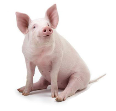 0.porco
